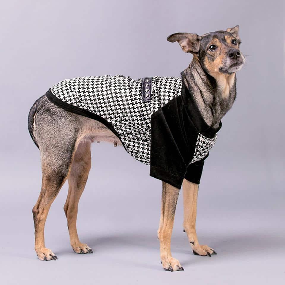 tapados para perros buenos aires