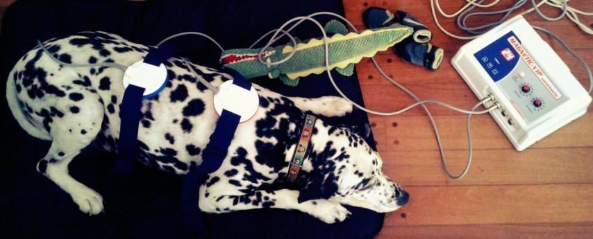 Perros dolor tratamiento Guía Mi Perro y Yo