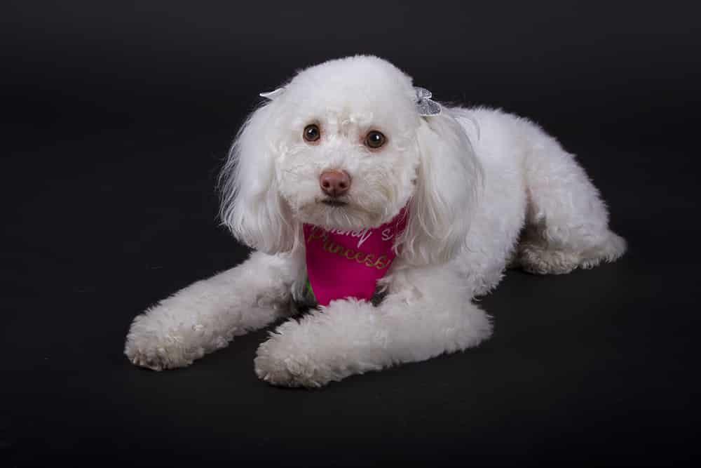 Ini Fotos Fotografía de Mascotas