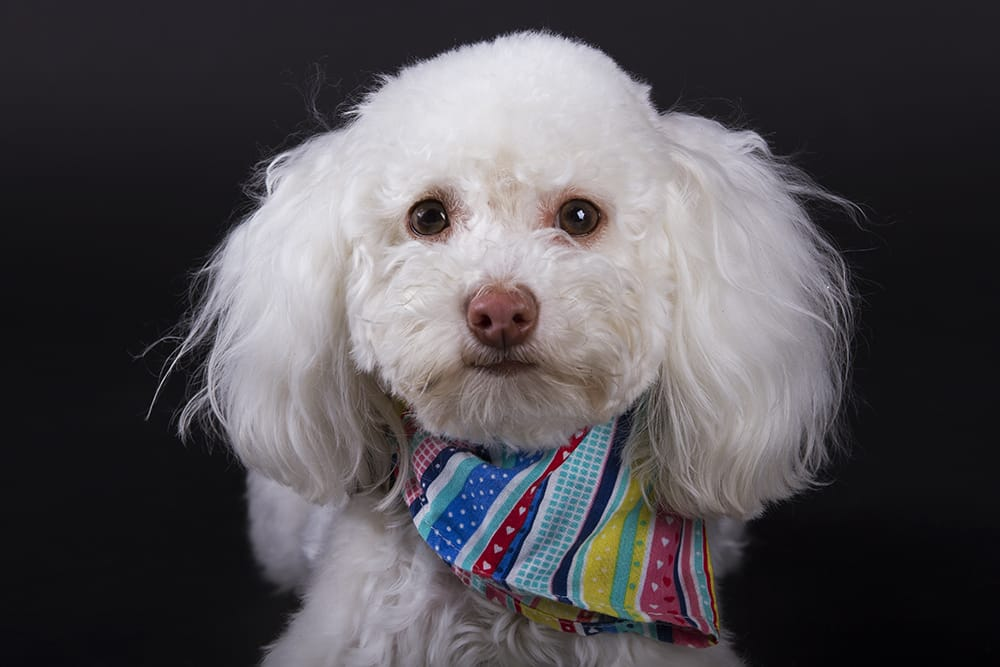 Ini Fotos - Fotografía de Mascotas