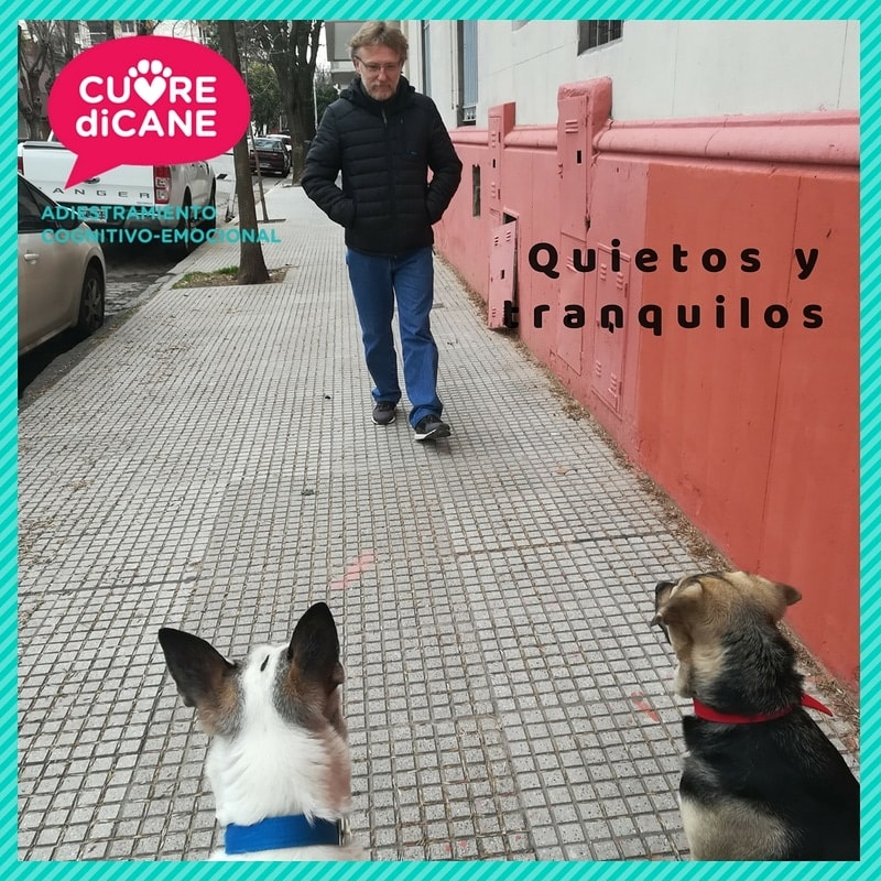 adiestradores caninos cuore di cane