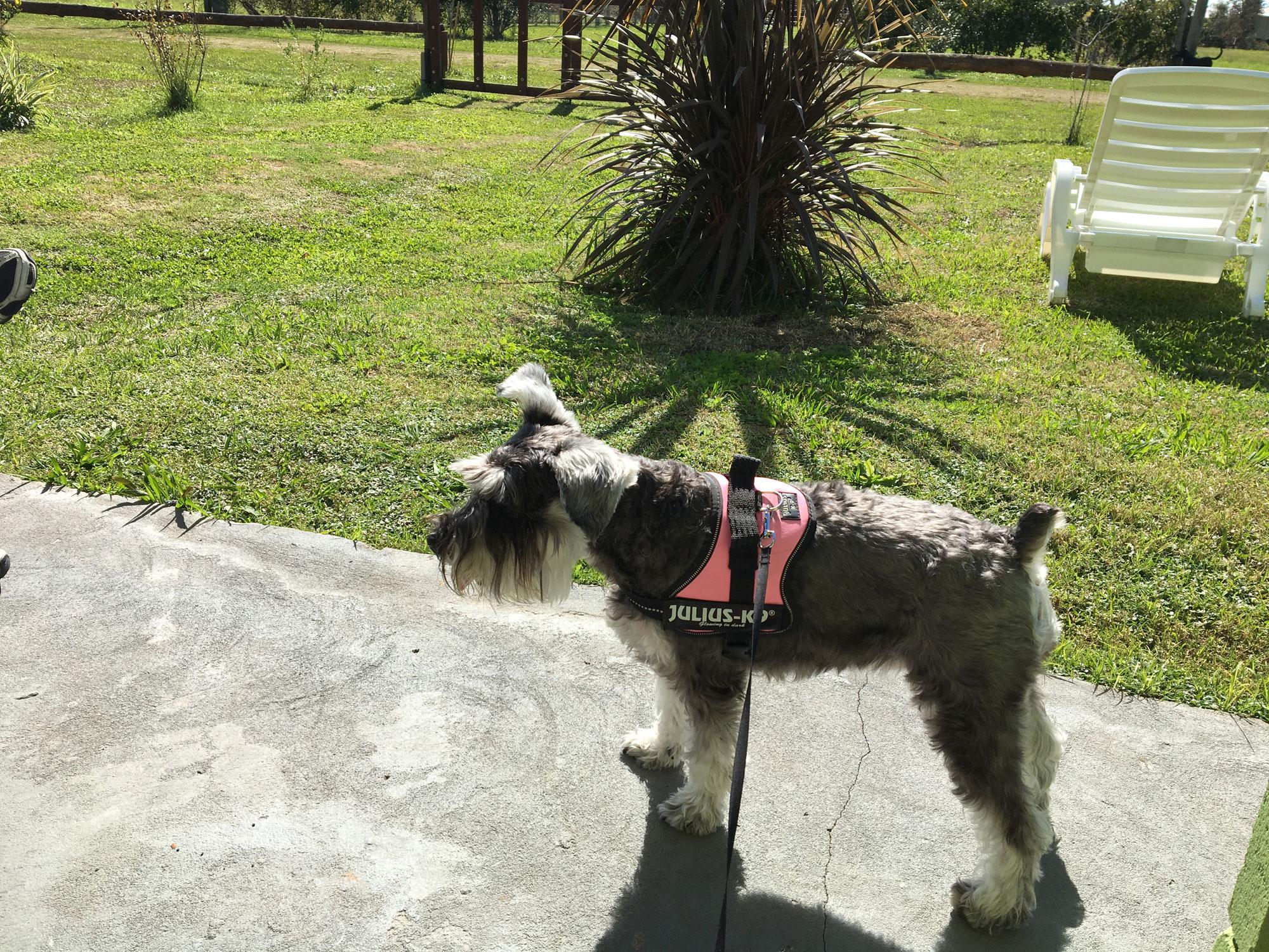 Perros Plantas Tóxicas sintomas