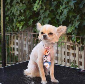 servicio de peluqueria para perros a domicilio Buenos Aires