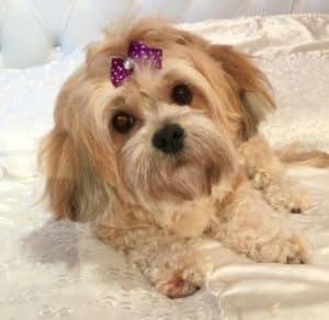 baño y corte de pelo para perros a domicilio