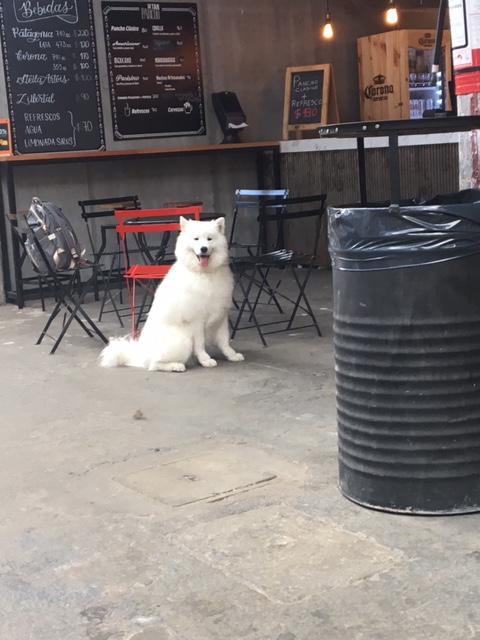 Guía Mi Perro & Yo - Sinergia, Montevideo