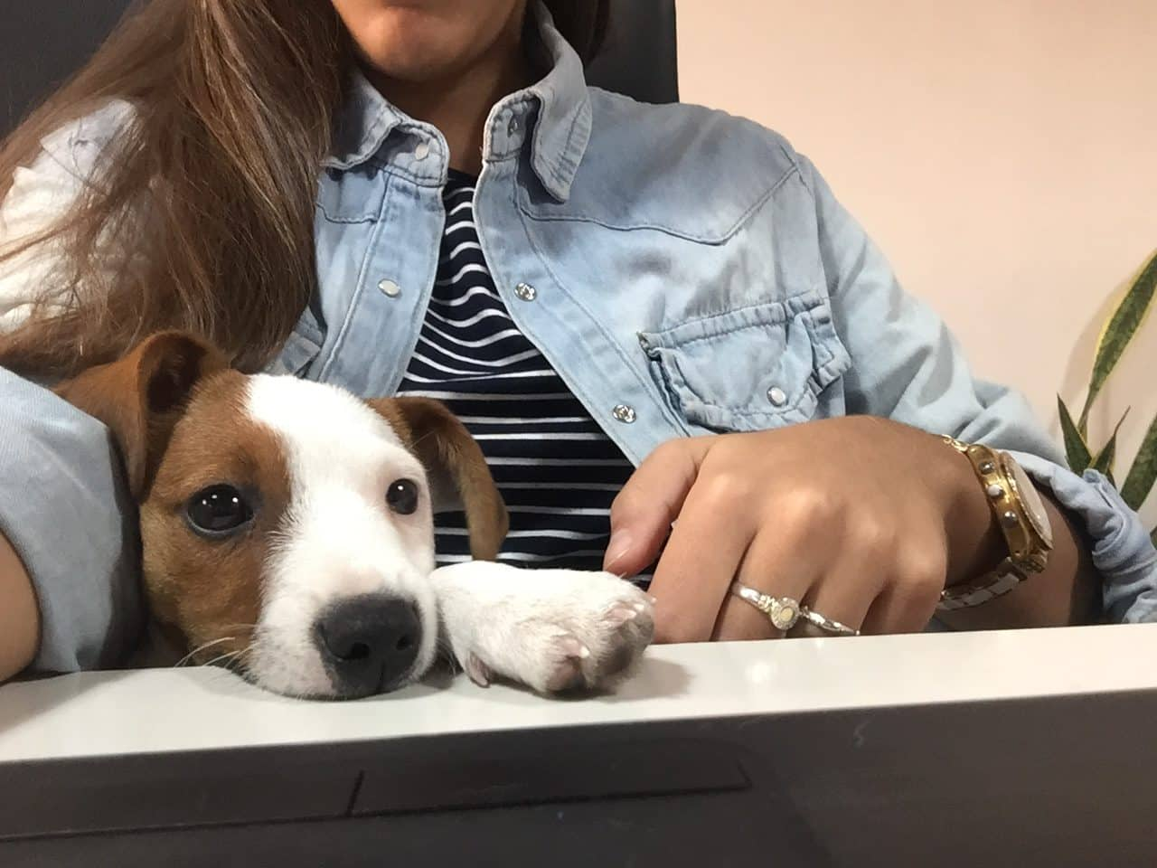 Oficinas Dog friendly