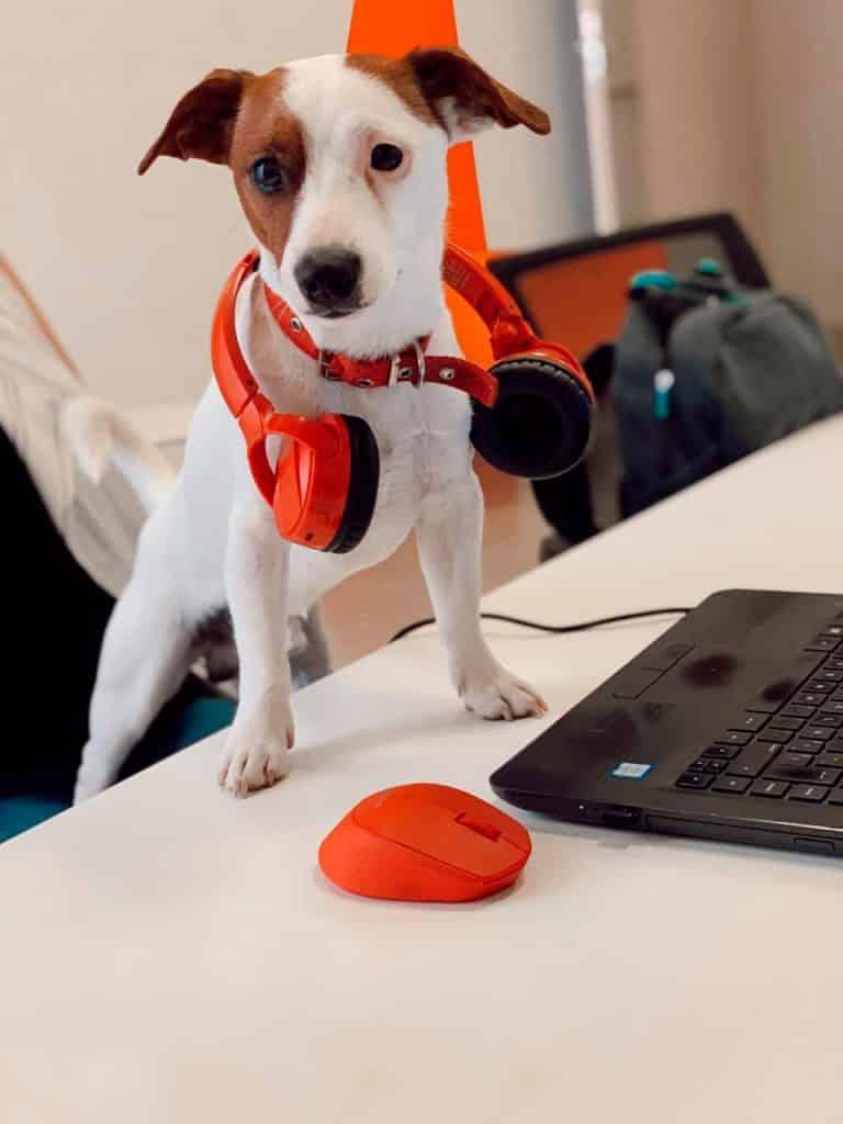 Milo en el trabajo Agencia Punto Rojo