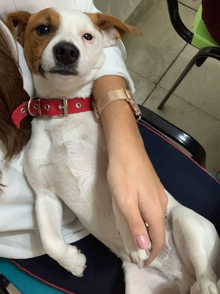 Perros en ambientes laborales Punto Rojo