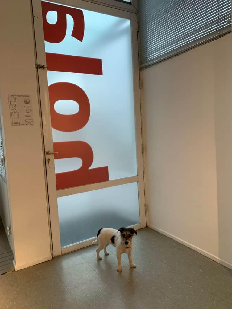 Milo el perro de Agencia Punto Rojo