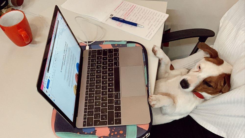 Oficinas Pet friendly Beneficios