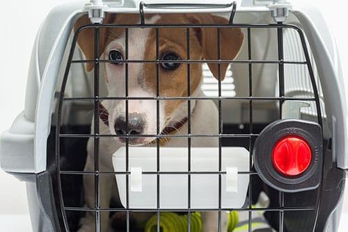 como adaptar a mi perro a la caja transportadora de viaje en avión