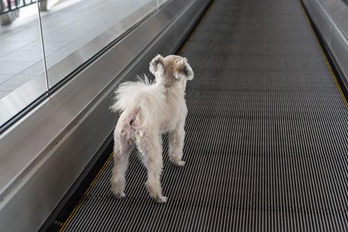 las mejores aerolineas para viajar con perro