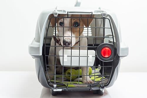 transportin IATA para mascotas
