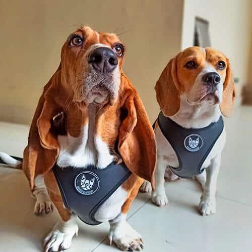 mejores pretales para perros argentina