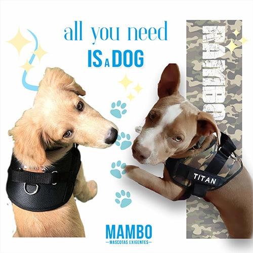 mambo mascotas exigentes