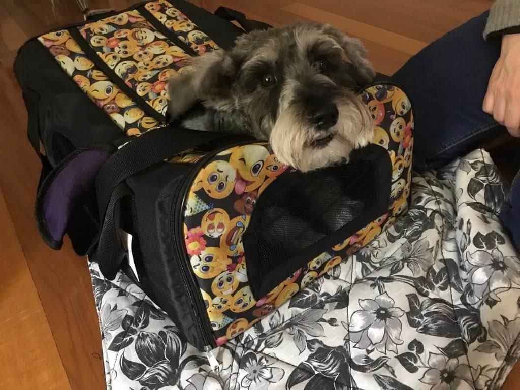 Transportín semirrigido para mascotas para viajes en avión apto para Air Europa.