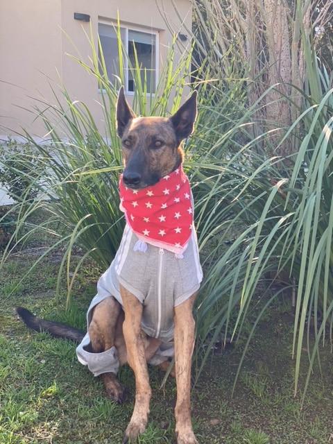 Bandana pañuelo para perro Hund.ar