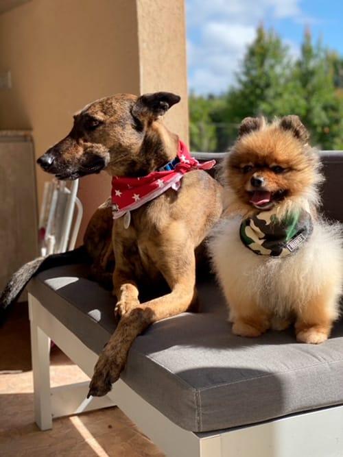 perros influencers de instagram argentina