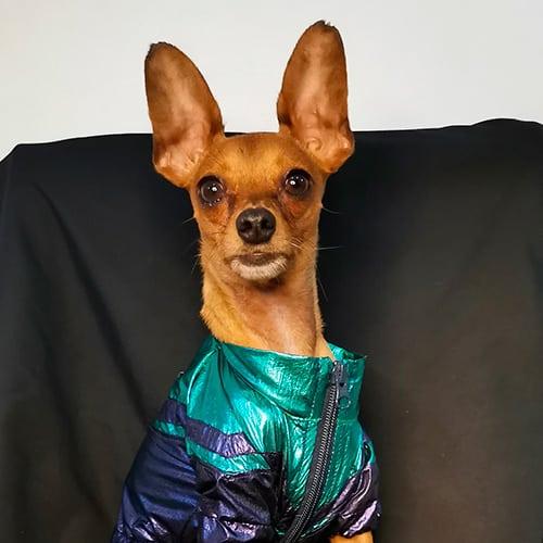 perros influencers concurso dog model mi perro y yo