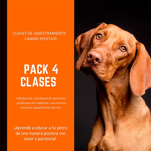 curso obediencia básica perros