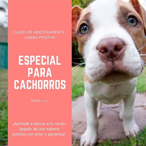educadores caninos para cachorros caba
